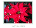 Poinsettia Card with greeting